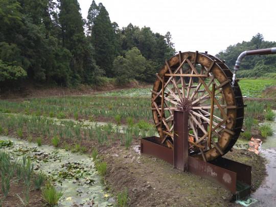 約5,000㎡敷地に水車が目印の日本原風景が感じられるフラワーパーク。