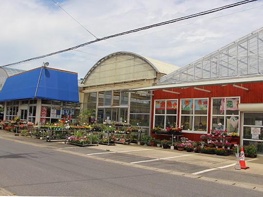 野菜苗木や季節の花苗などを生産直売 家庭菜園用に始めたい方もプロのスタッフにお尋ねください
